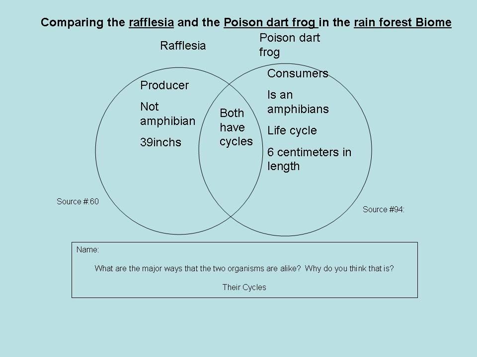 Rainforest And Desert Venn Diagram | Diagram